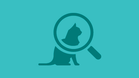 Blue cat in magnifying glass