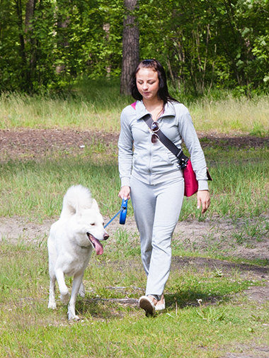 White german shepherd walking on lead with owner